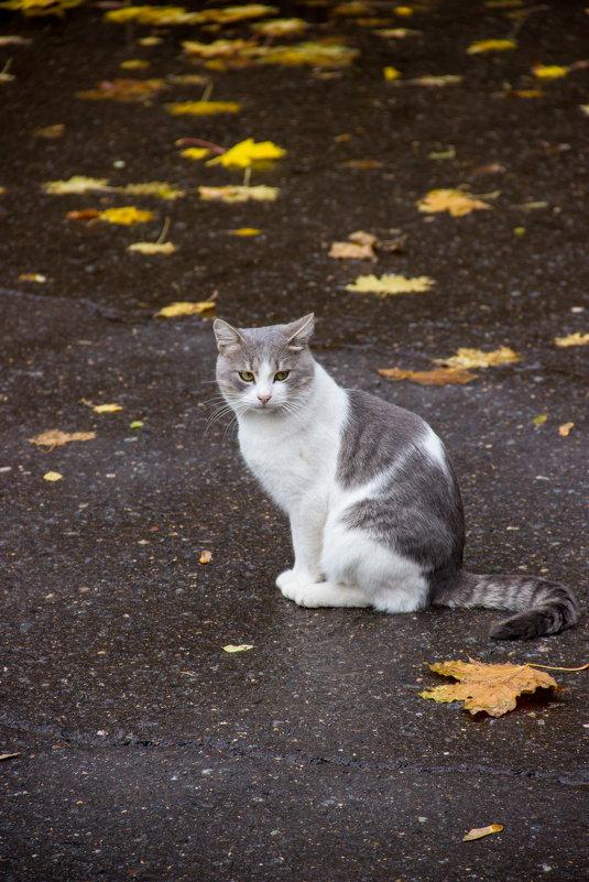 Кошки нашего двора - Elena Ignatova