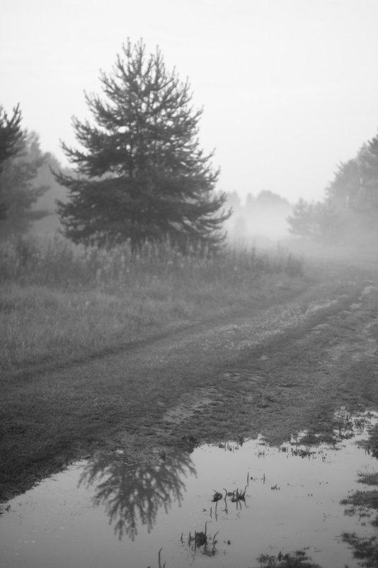 Туман - Ольга Лапшина