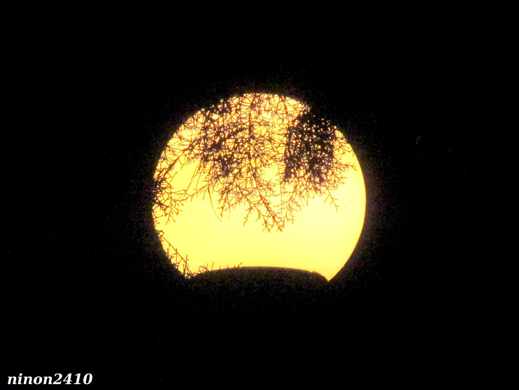 Вечерний фонарь - Нина Бутко