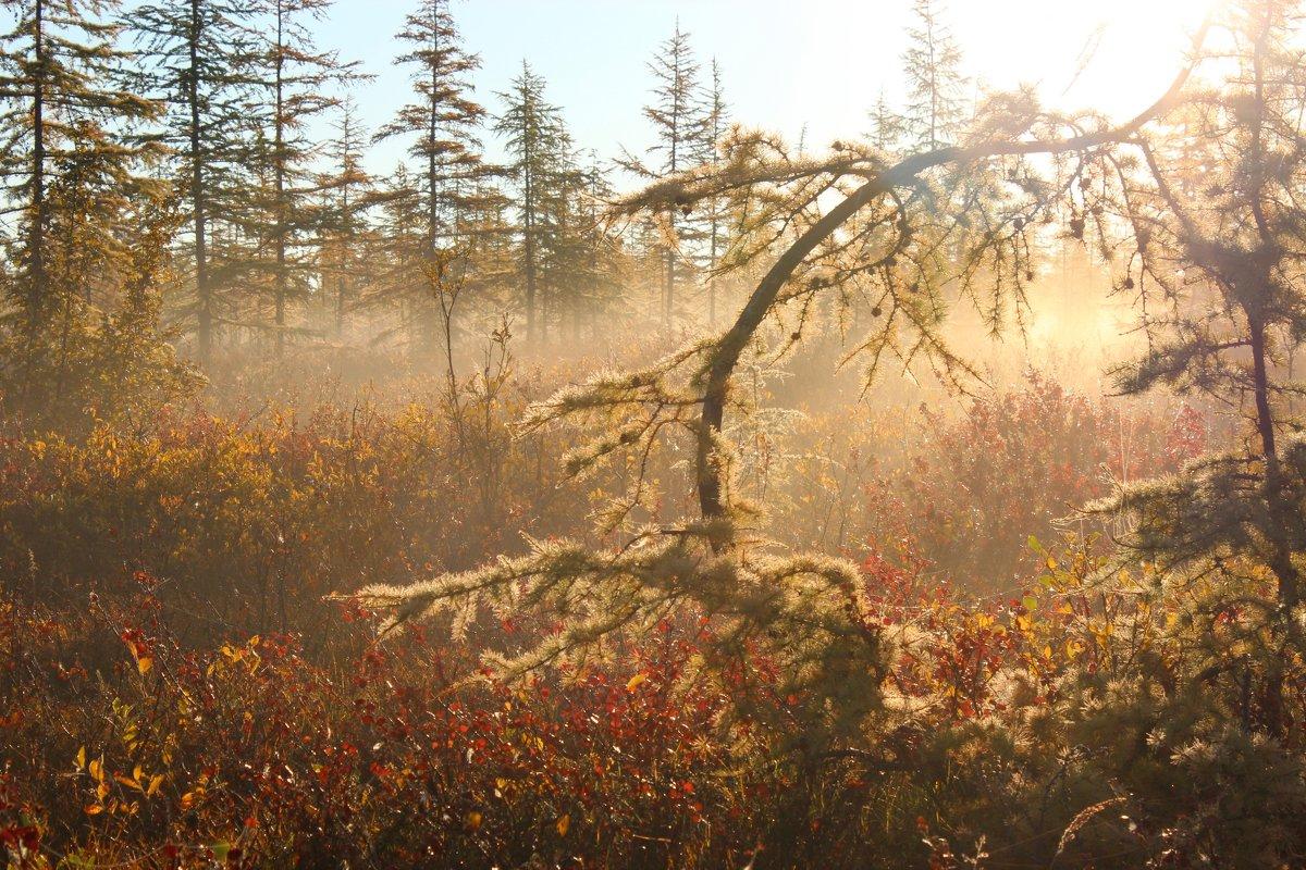 Утро лесо - тундры Арктики - Александр Велигура
