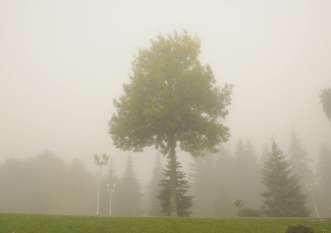 Дерево в утреннем тумане - Сергей Тагиров
