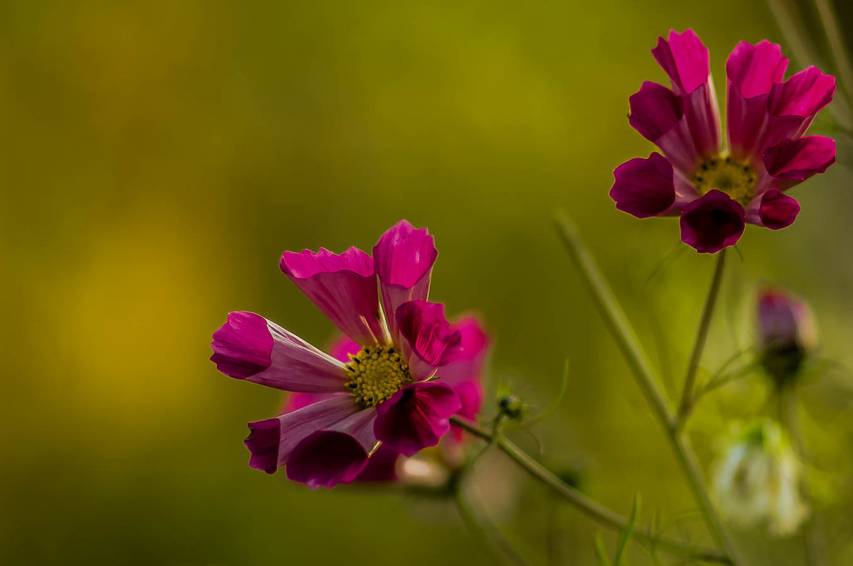 Цветы запоздалые... - Nonna