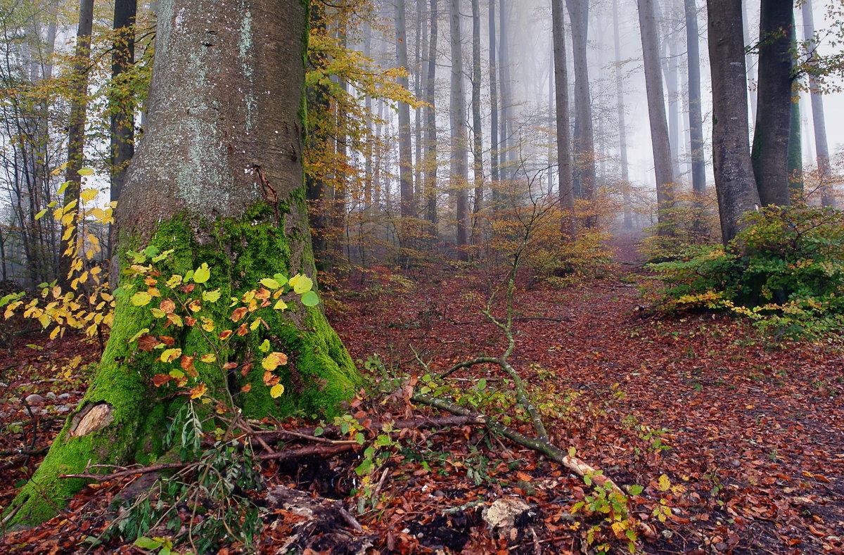в осеннем лесу - Elena Wymann
