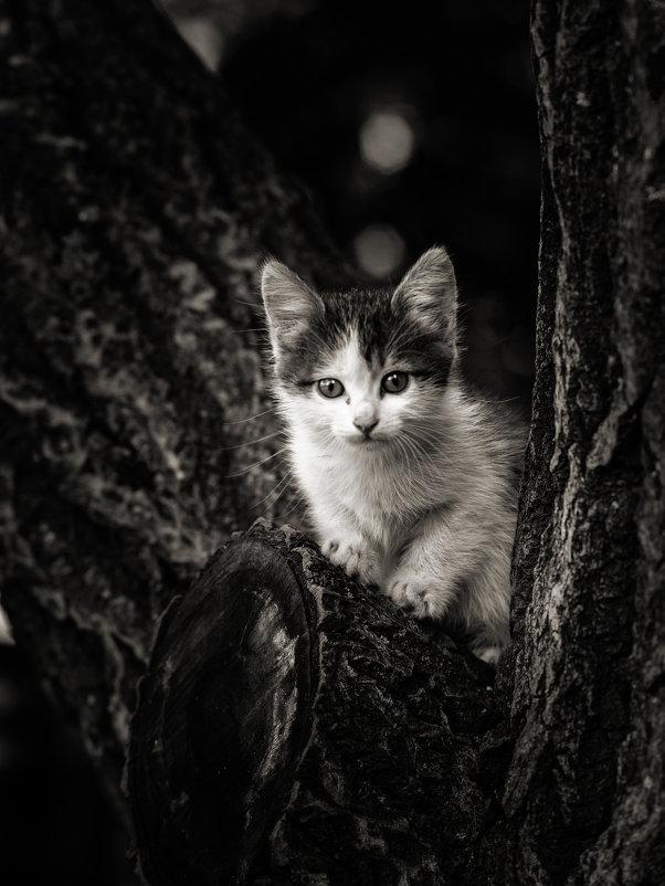 Котёнок - Вадим
