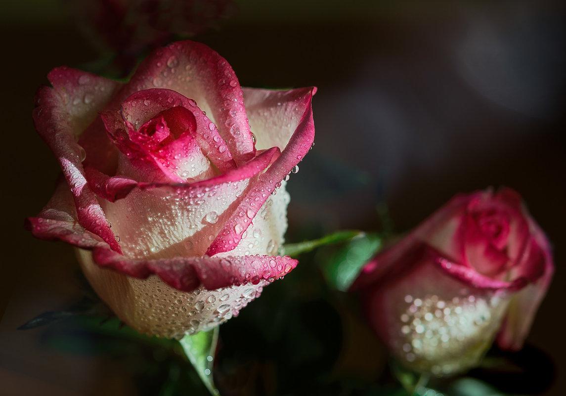 Дарите девушкам цветы - Сергей Бурлакин