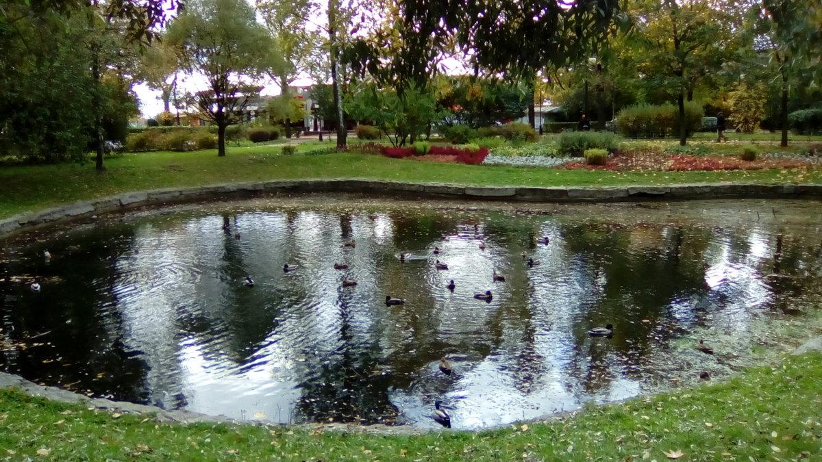 Осенний пруд в Александровском саду. (Санкт-Петербург). - Светлана Калмыкова