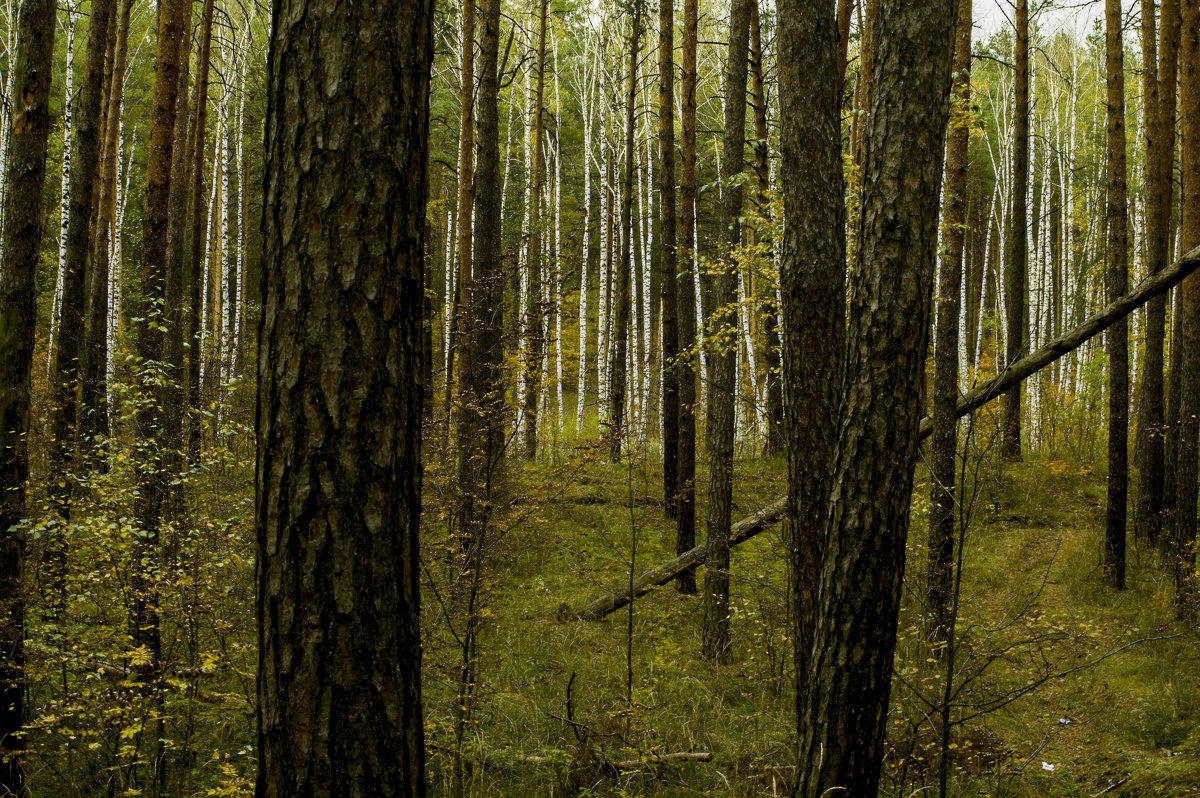 Осень - Яков Реймер