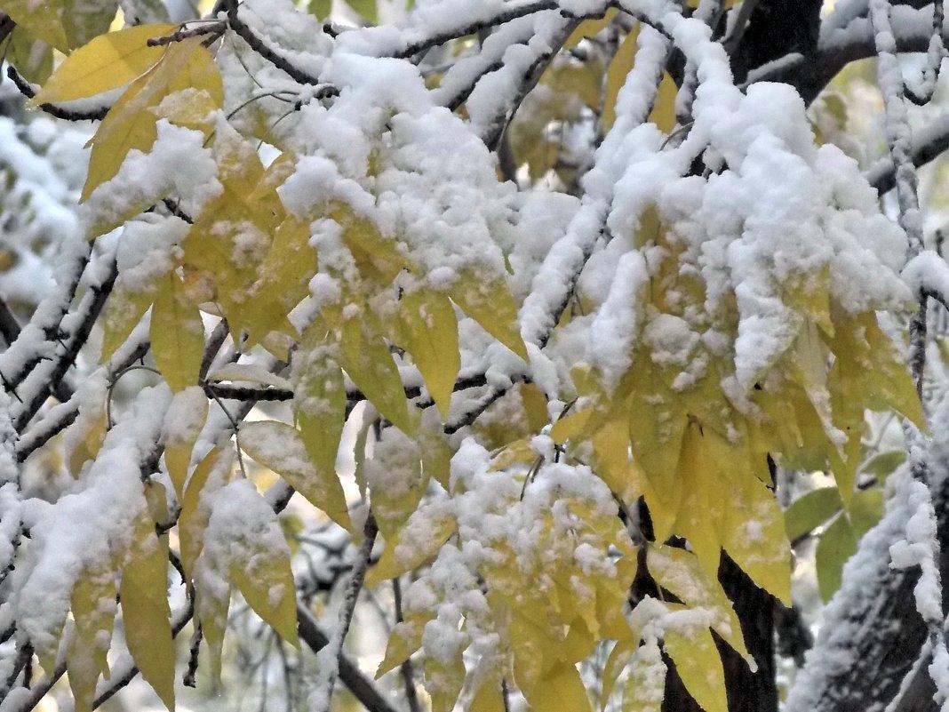 Припорошил снежок листья ясеня - Domna Kuznechic