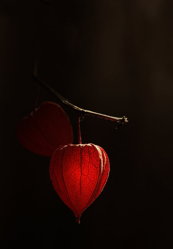 Осенний свет - Olenka