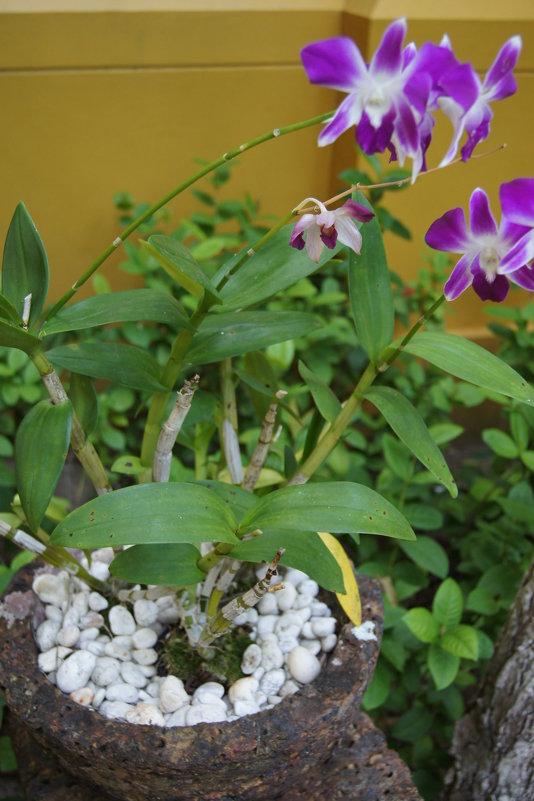 Орхидеи - Наташа Федорова