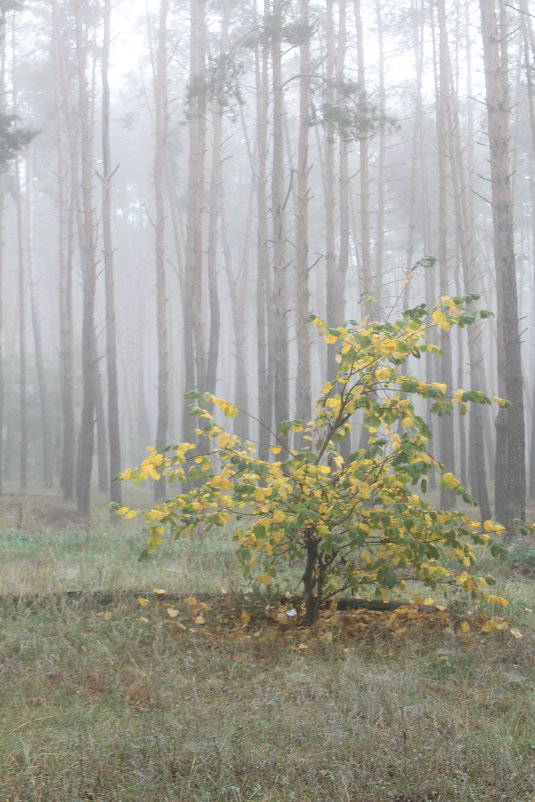 туман - Галина Фуникова