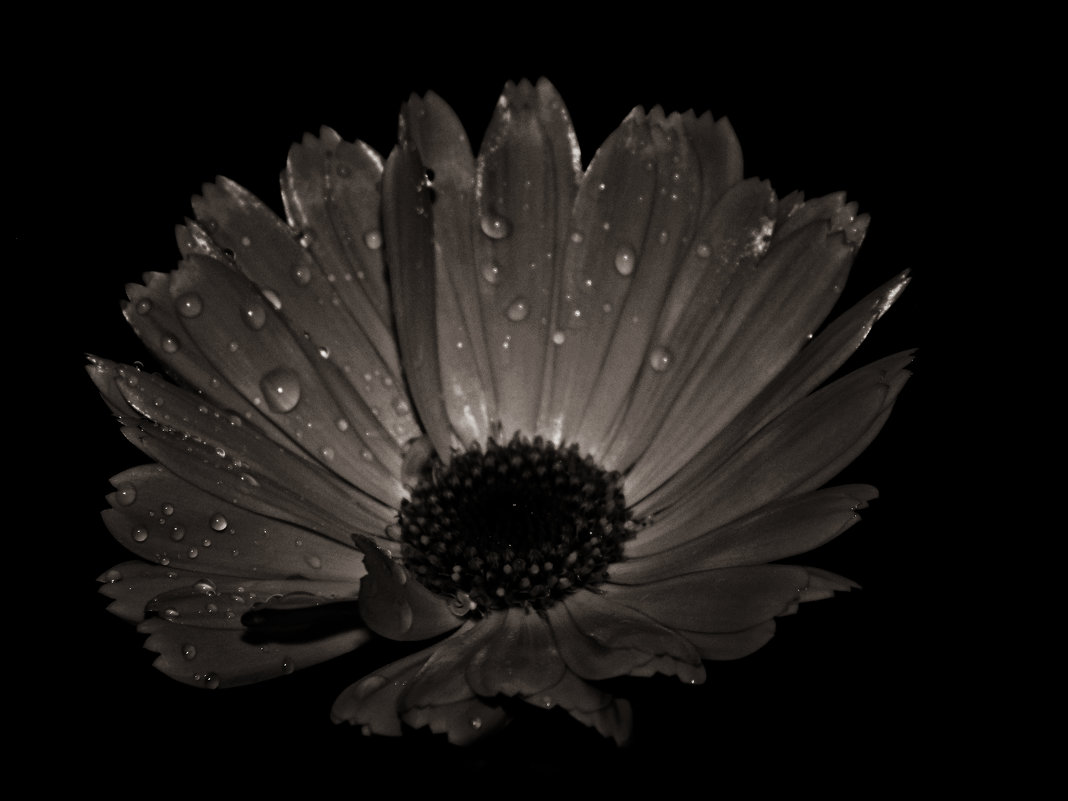 Цветок - Шура Еремеева
