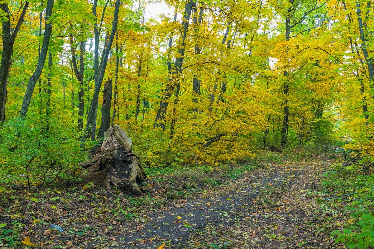 Осень пришла в лес - Юрий Стародубцев