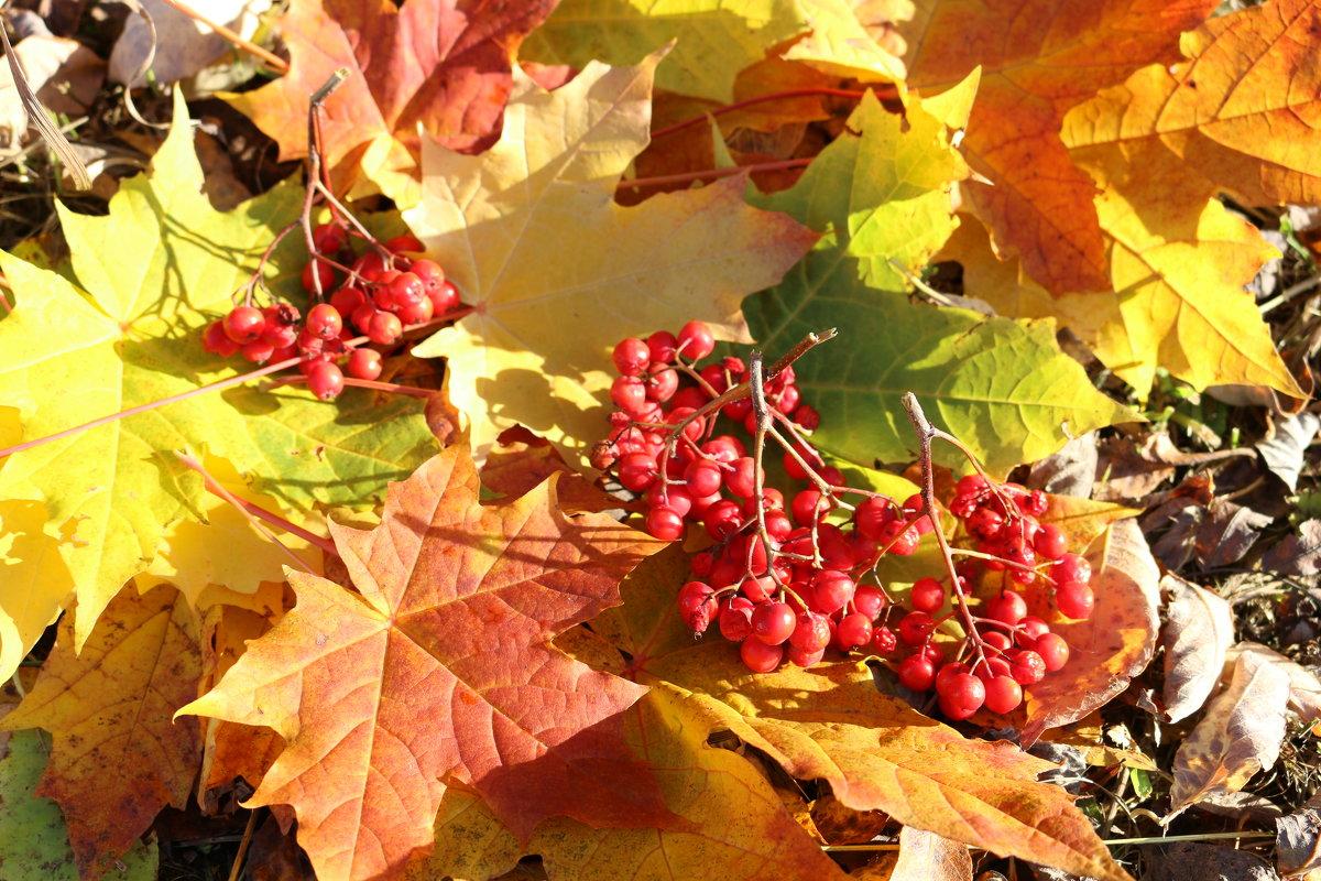 Осенний блюз - Ольга