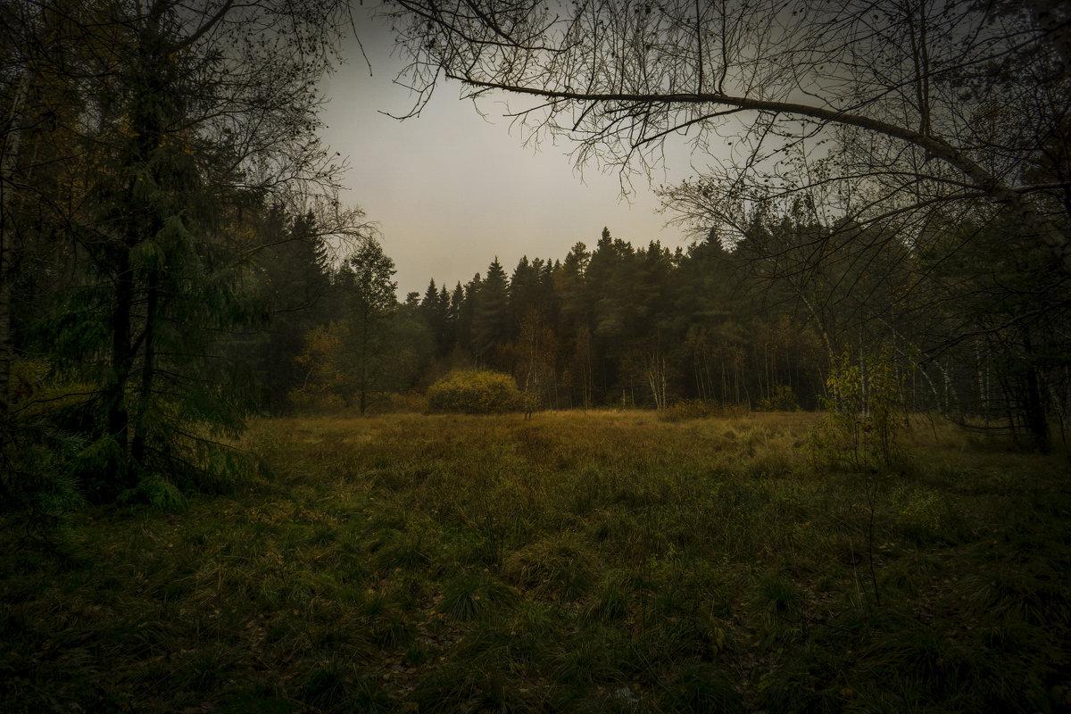 Поляна в лесу - Алексей Строганов