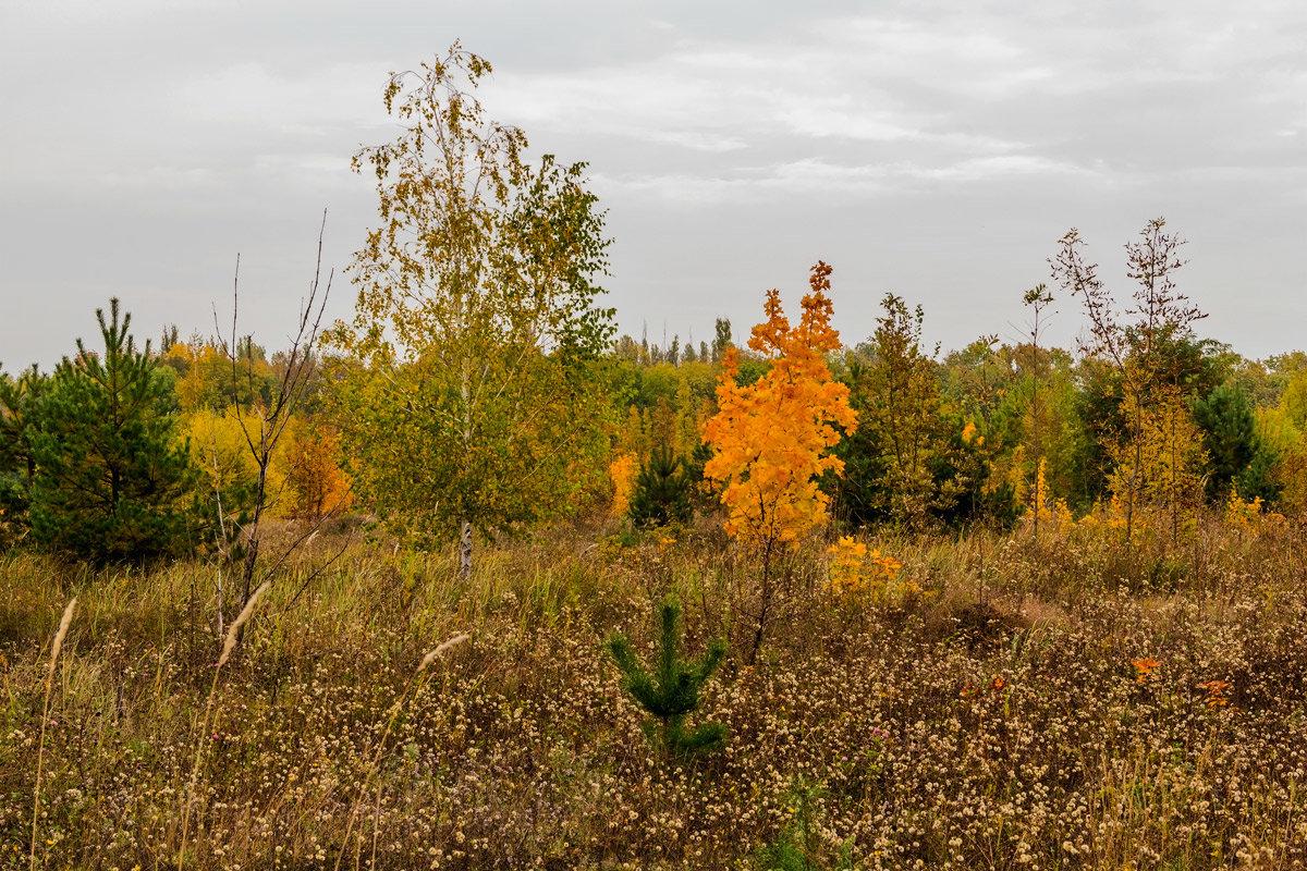 На краю леса - Юрий Стародубцев