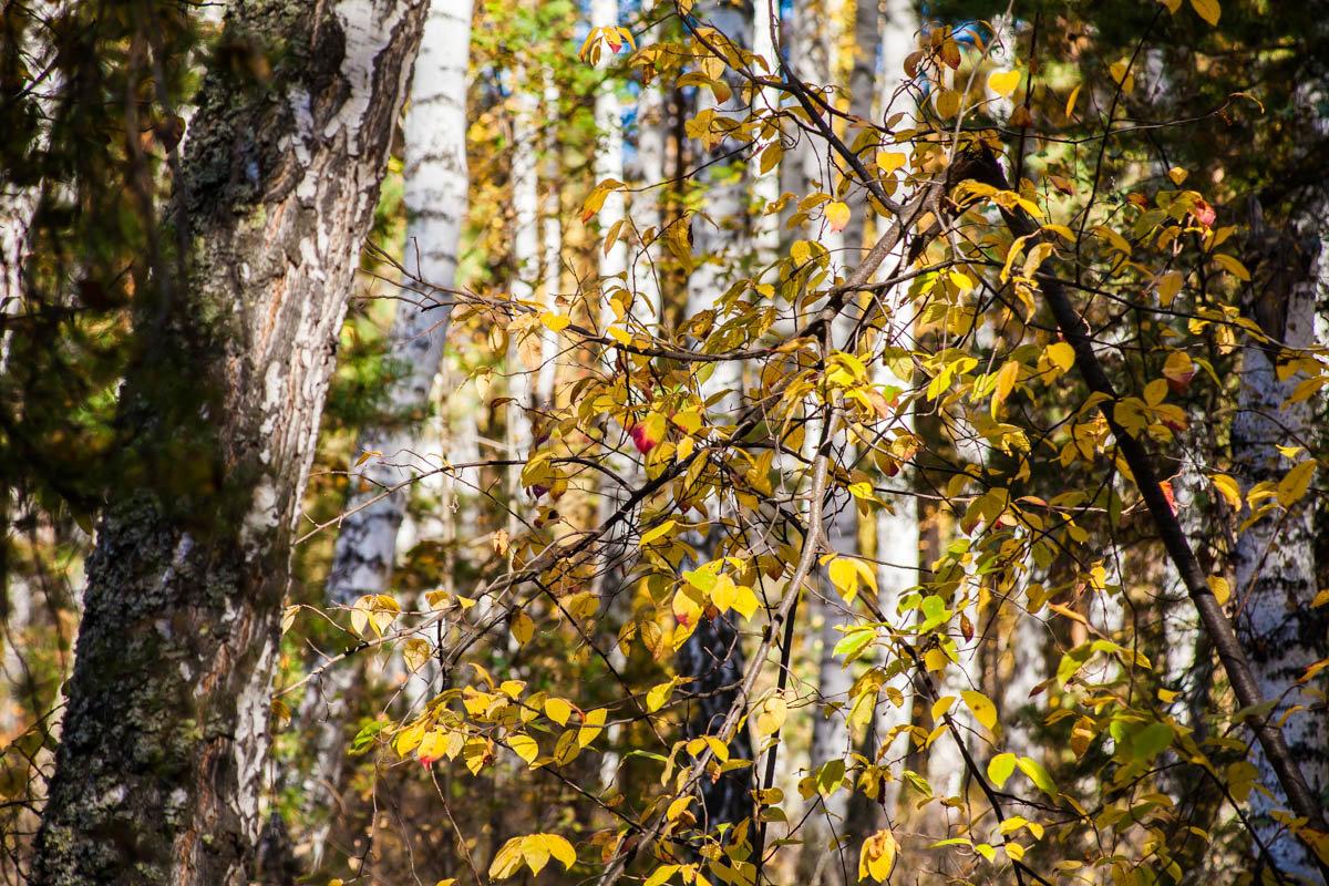 Желтый лист осенний - Евгений Мельников