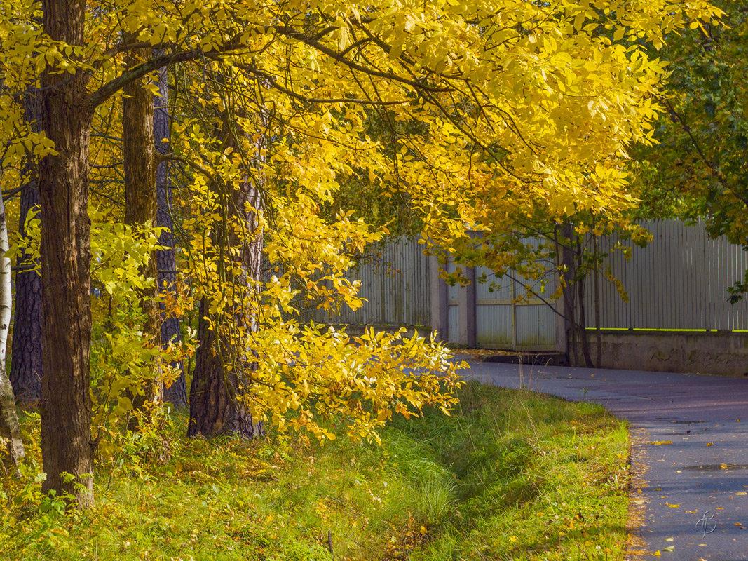 Осень на Парковой улице - Виталий