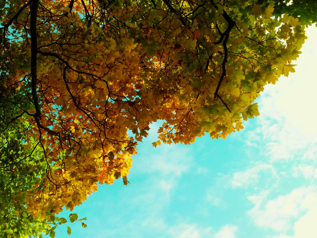 Осень - Александра Кускова