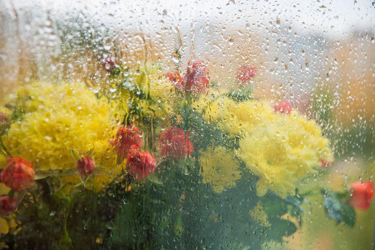 А дождь стучит в моё окно... - Светлана