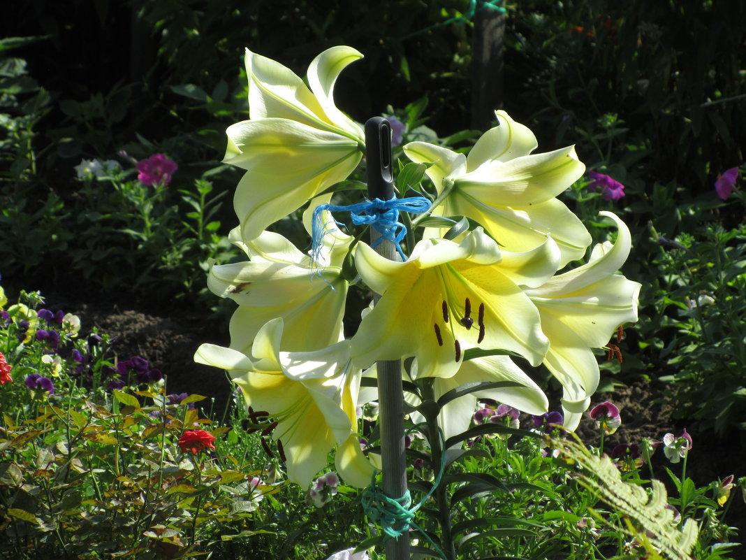 прекрасные цветы - Марина