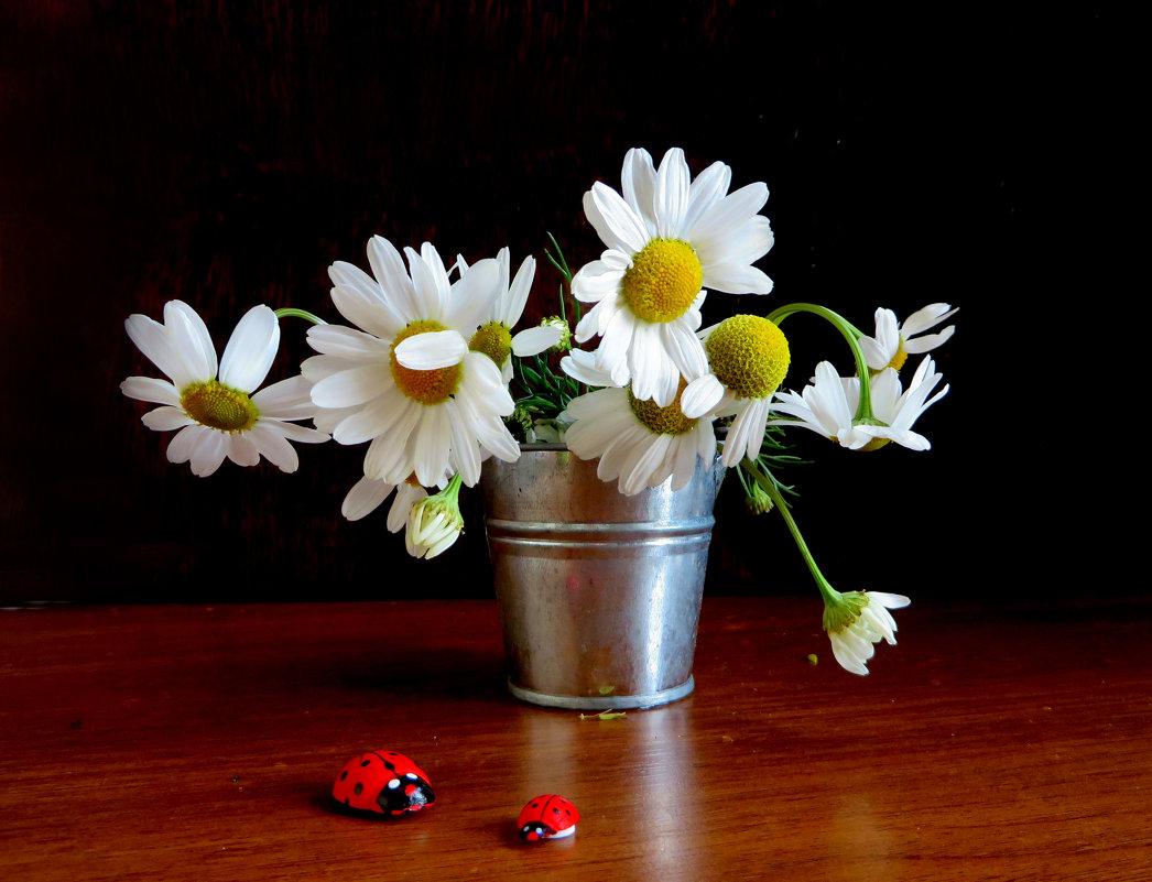 Осенние ромашки - осени глаза - Наталья Джикидзе (Берёзина)