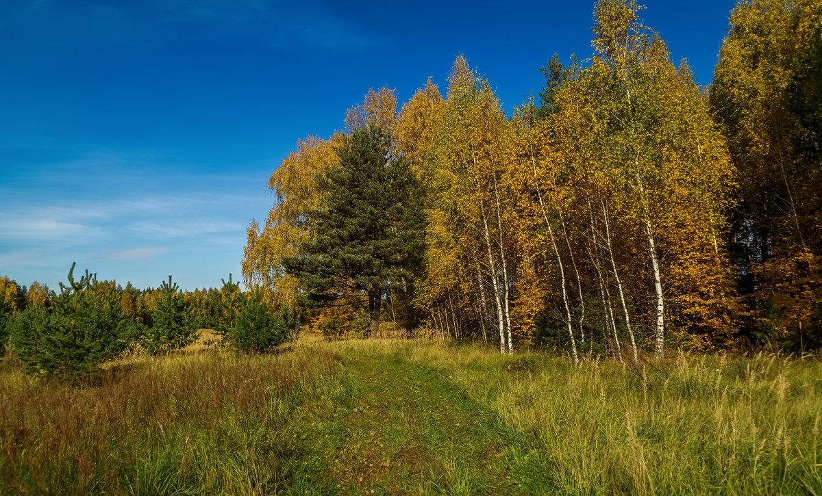 Что такое осень это ..... - Андрей Дворников