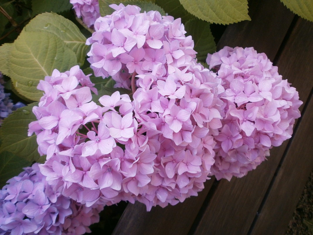 В саду летом ... - Алёна Савина