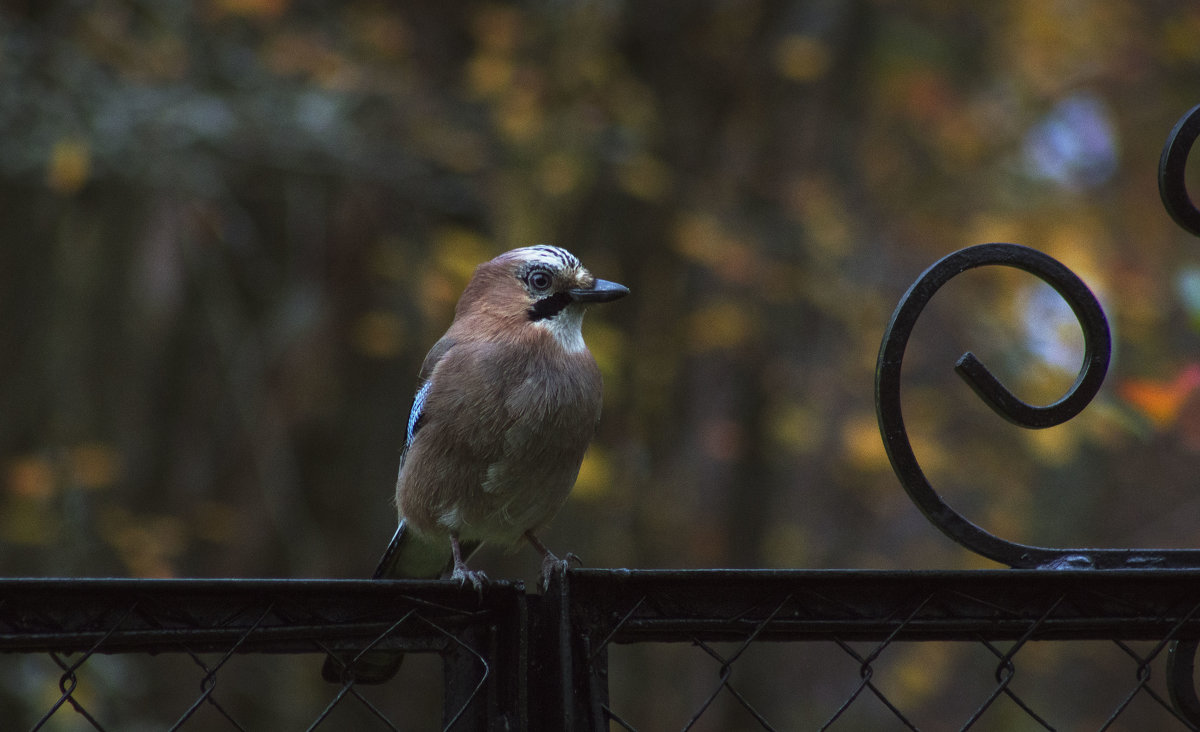 Лесная птица - Aнна Зарубина