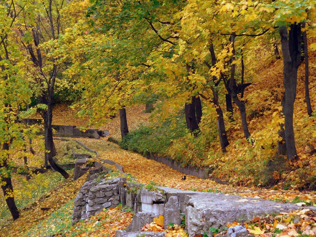 Сыпет осень желтою листвою... - ирина