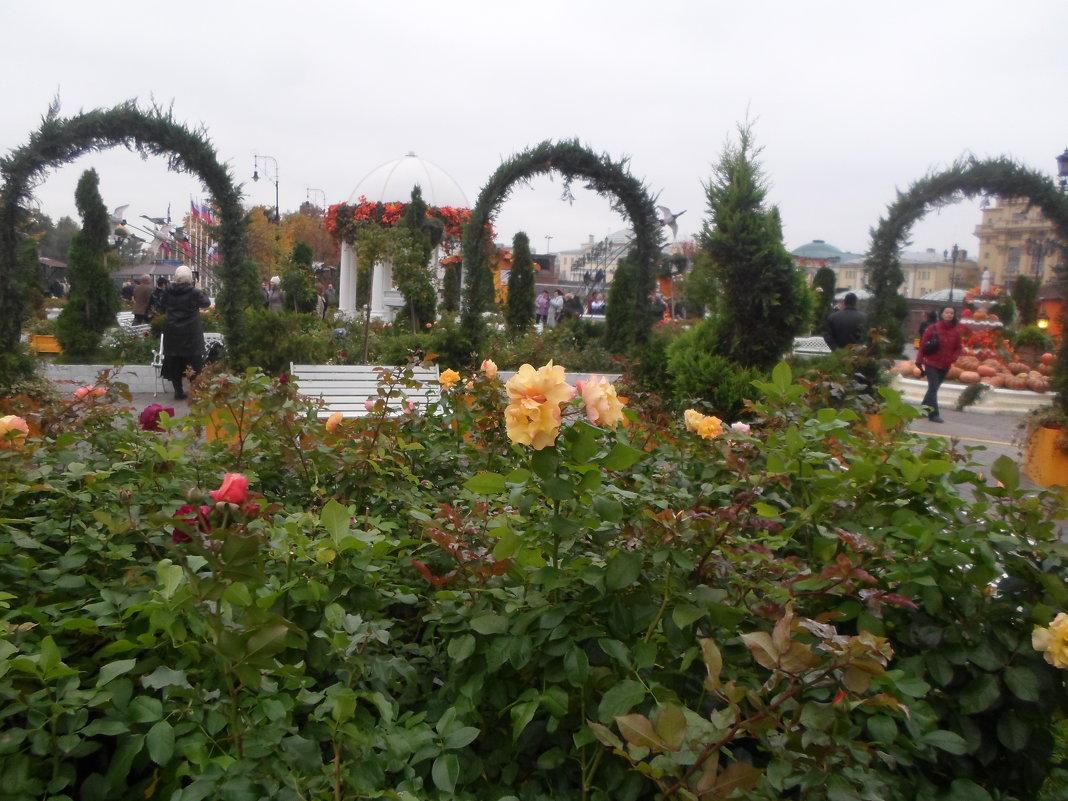 Розы осенние - BoxerMak Mak