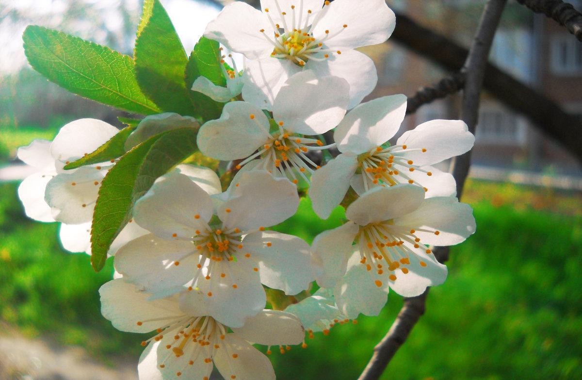 Весна - Victoria