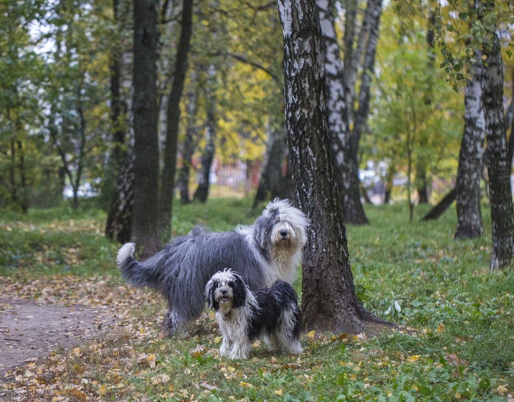 моя парочка в осеннем лесу - Лариса Батурова