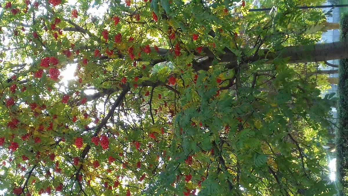 Осень - &Любовь& &~&