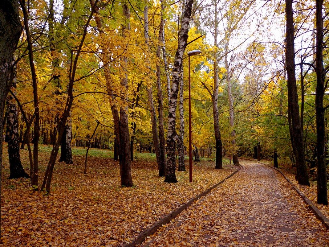 в парке - Наталья Сазонова