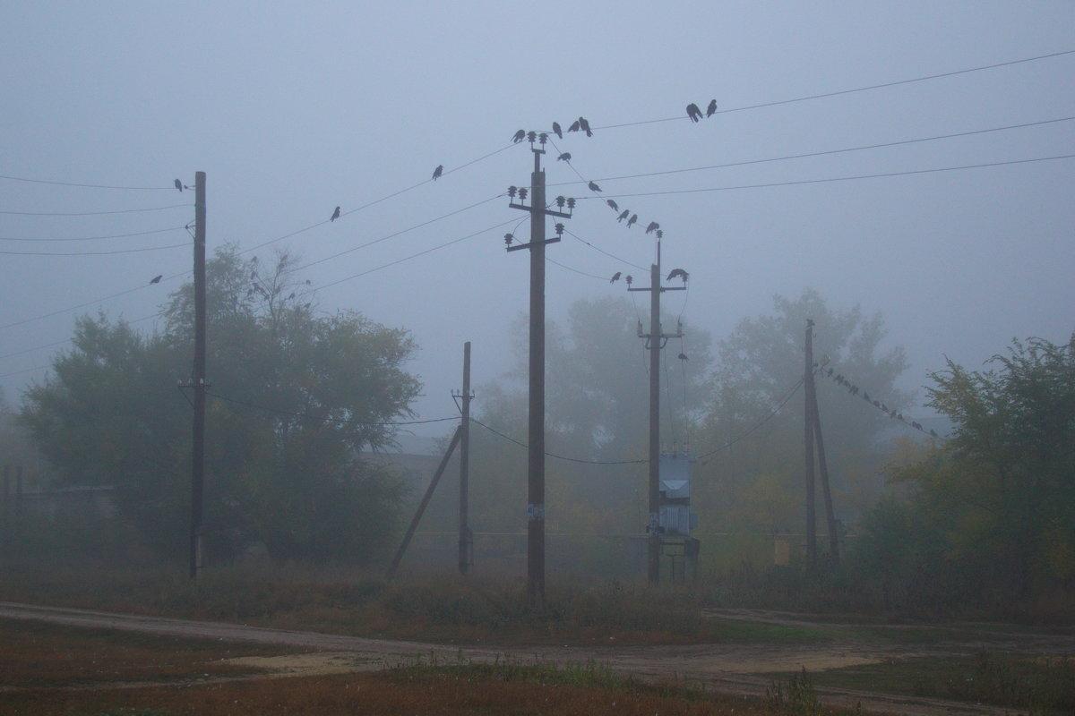 Утро, туман и вороны - Арсений Корицкий