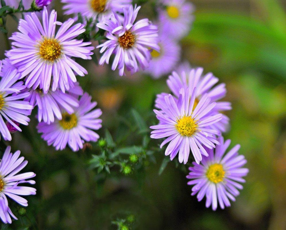 Цветы. - владимир