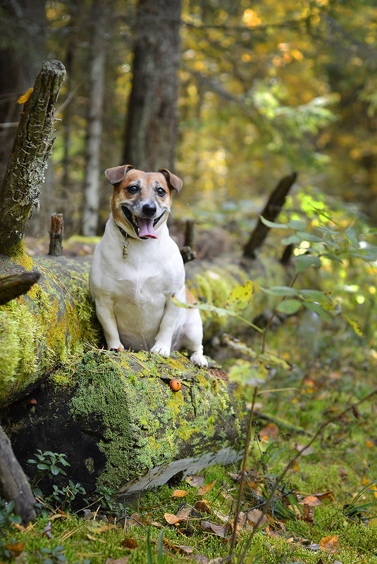 прогулка в лесу - Asya Piskunova