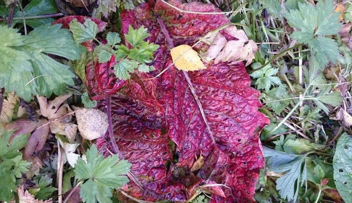 Осенние краски - Galina194701
