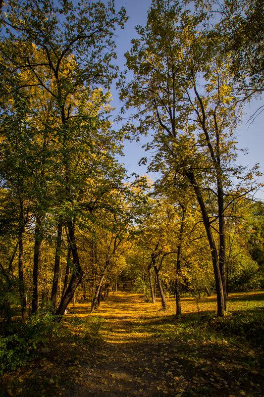 Осенний парк - Александр Шамов