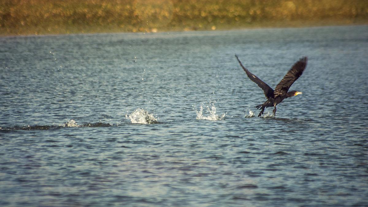На озере - Vitalij P