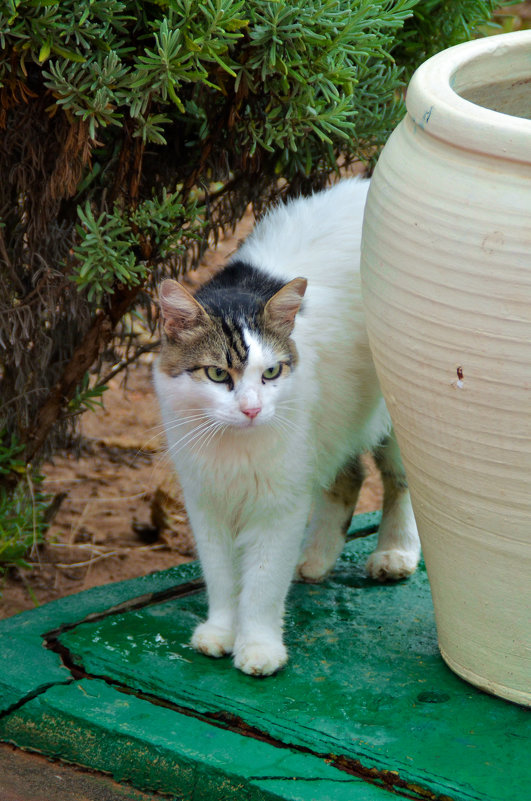 кошки Туниса - Евгений Фролов