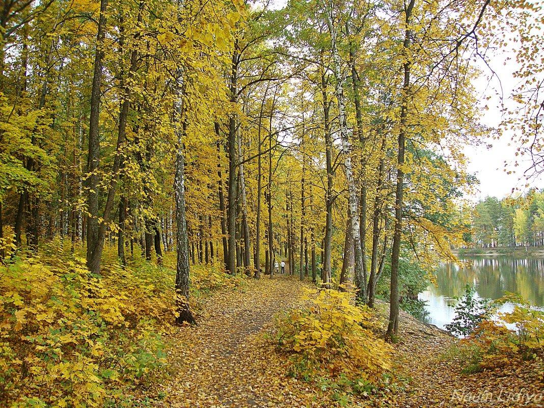 Тропки покрытые листьями - Лидия (naum.lidiya)