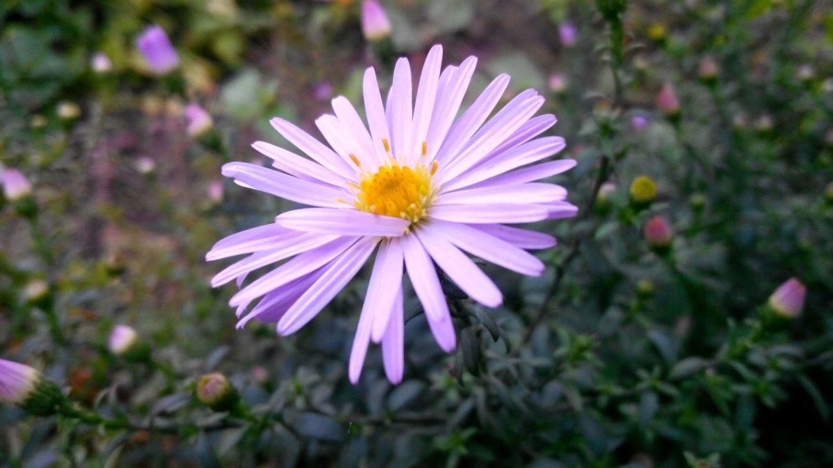 Цветок - Татьяна Королева