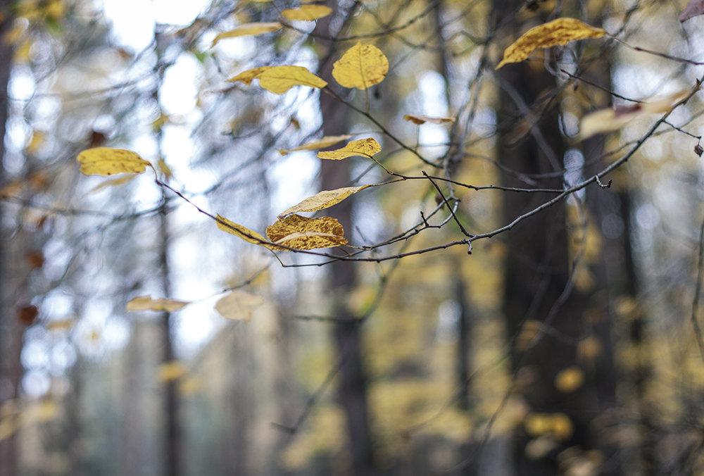 Осень... - Наталья Щепетнова