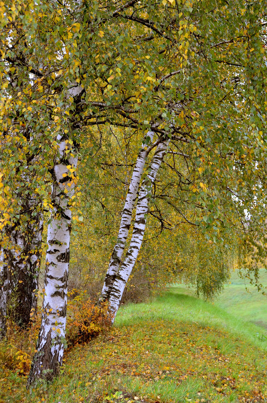 Золотая осень - Ольга