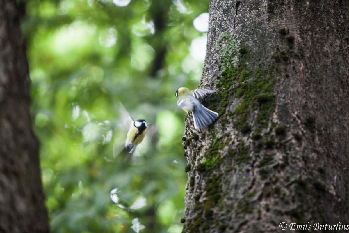 Птички - Emil Buturlin