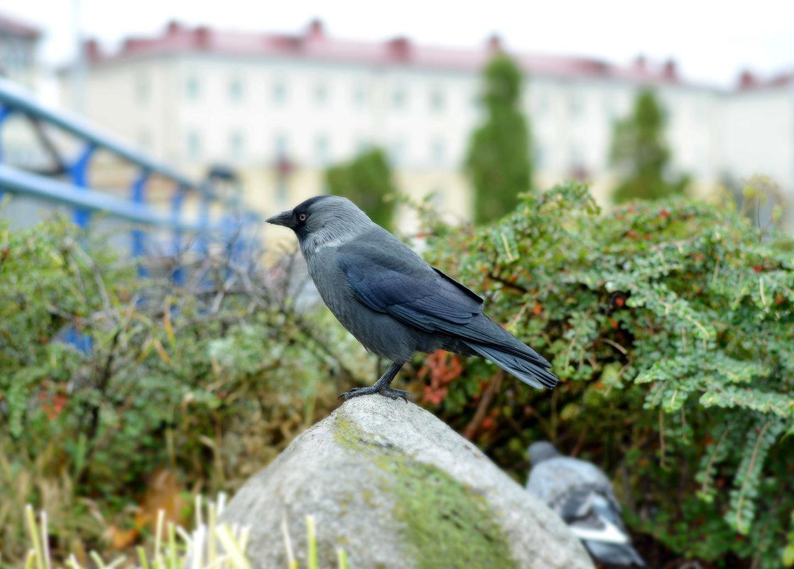 Ворона на камне - Марина Романова