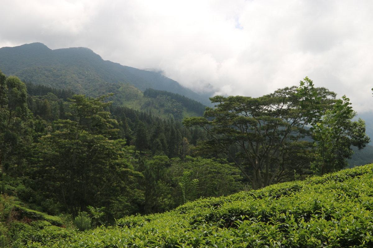 Sri-Lanka - Андрей