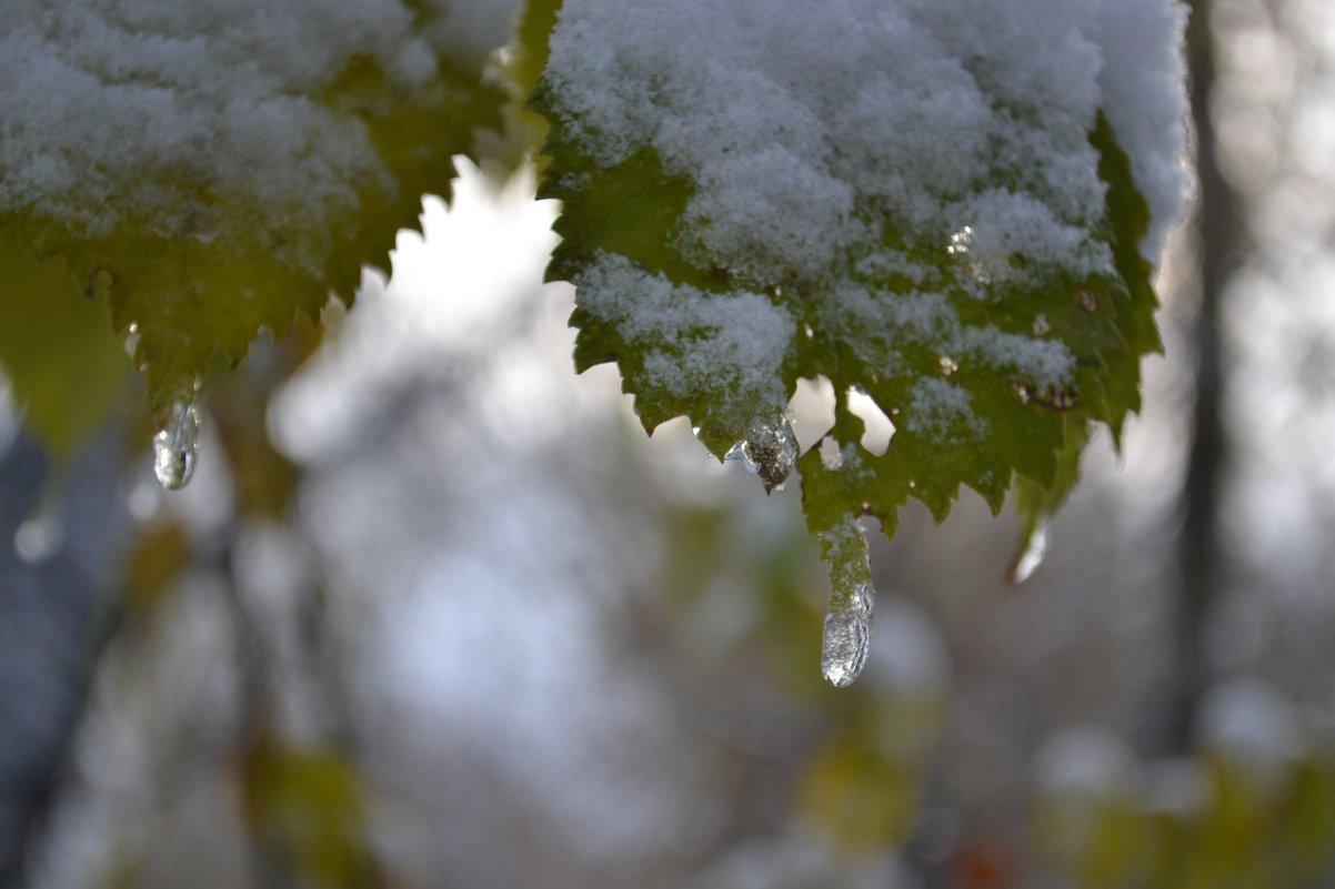 снег... - Елена Рекк